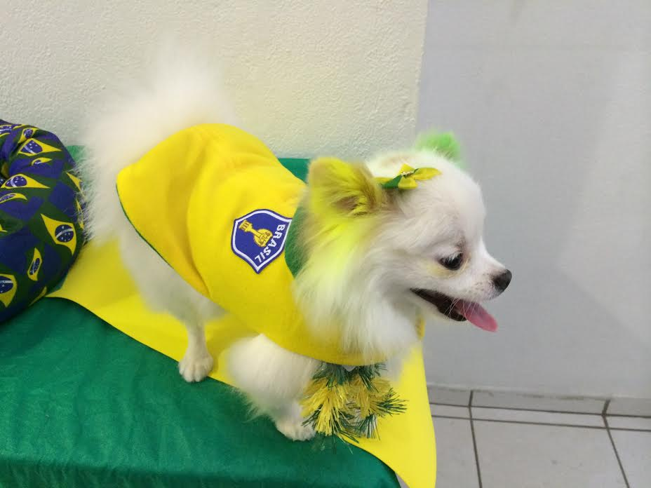 Donos de cães e gatos vestem animais com roupas da seleção