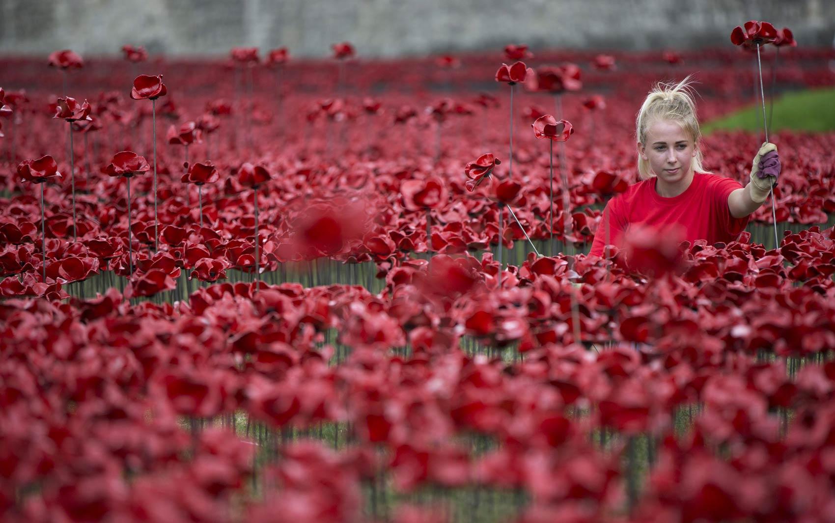 Voluntária posa com uma papoula vermelha de cerâmica enquanto trabalha na instalação 'Campos lavados de sangue e mares de vermelho', que marca a I Guerra Mundial ao lado da Torre de Londres. A obra terá 888.246 flores lembrando militares mortos na guera