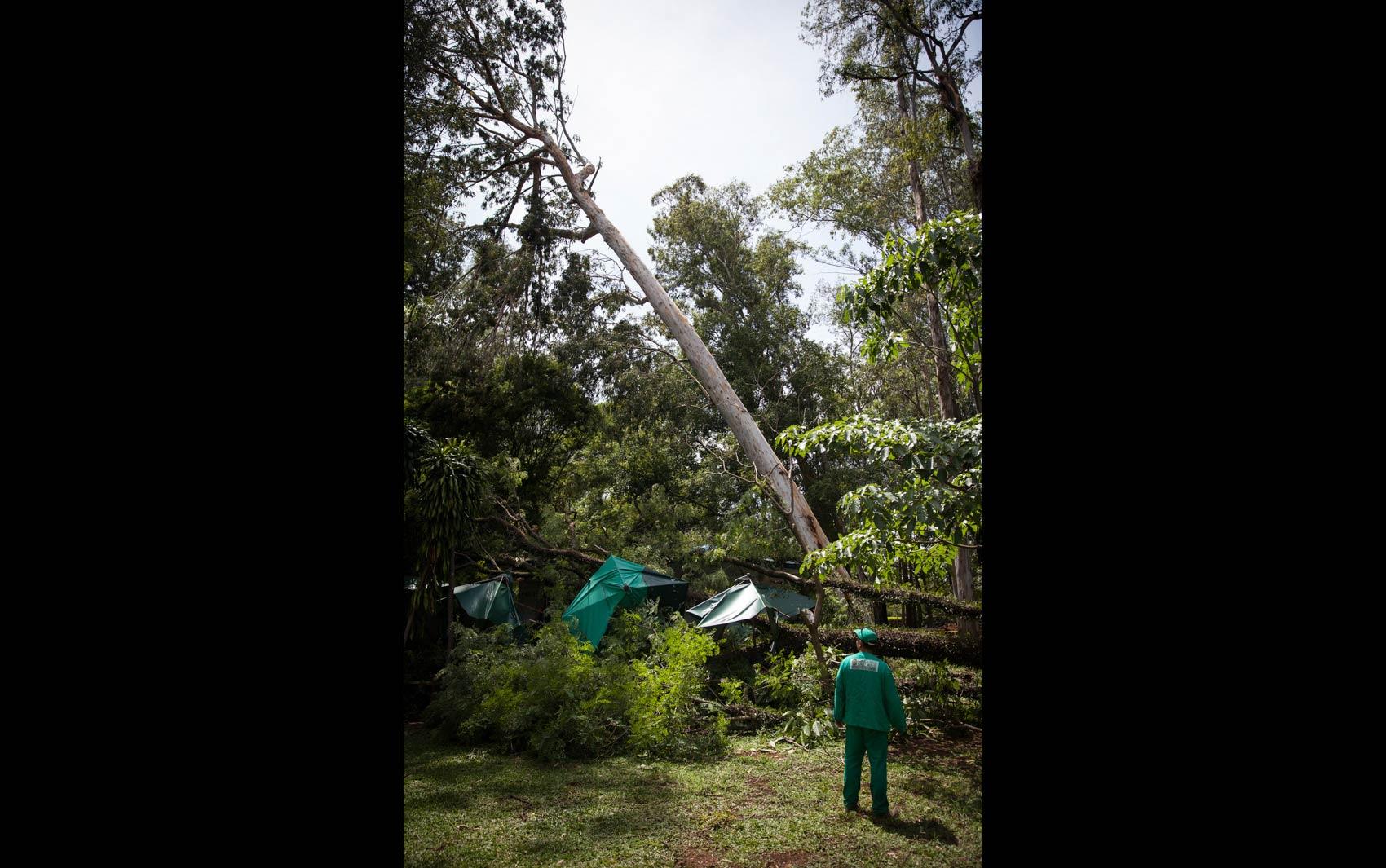 FOTOS: Forte chuva derruba árvores em São Paulo fotos em São  #307069 1700 1065