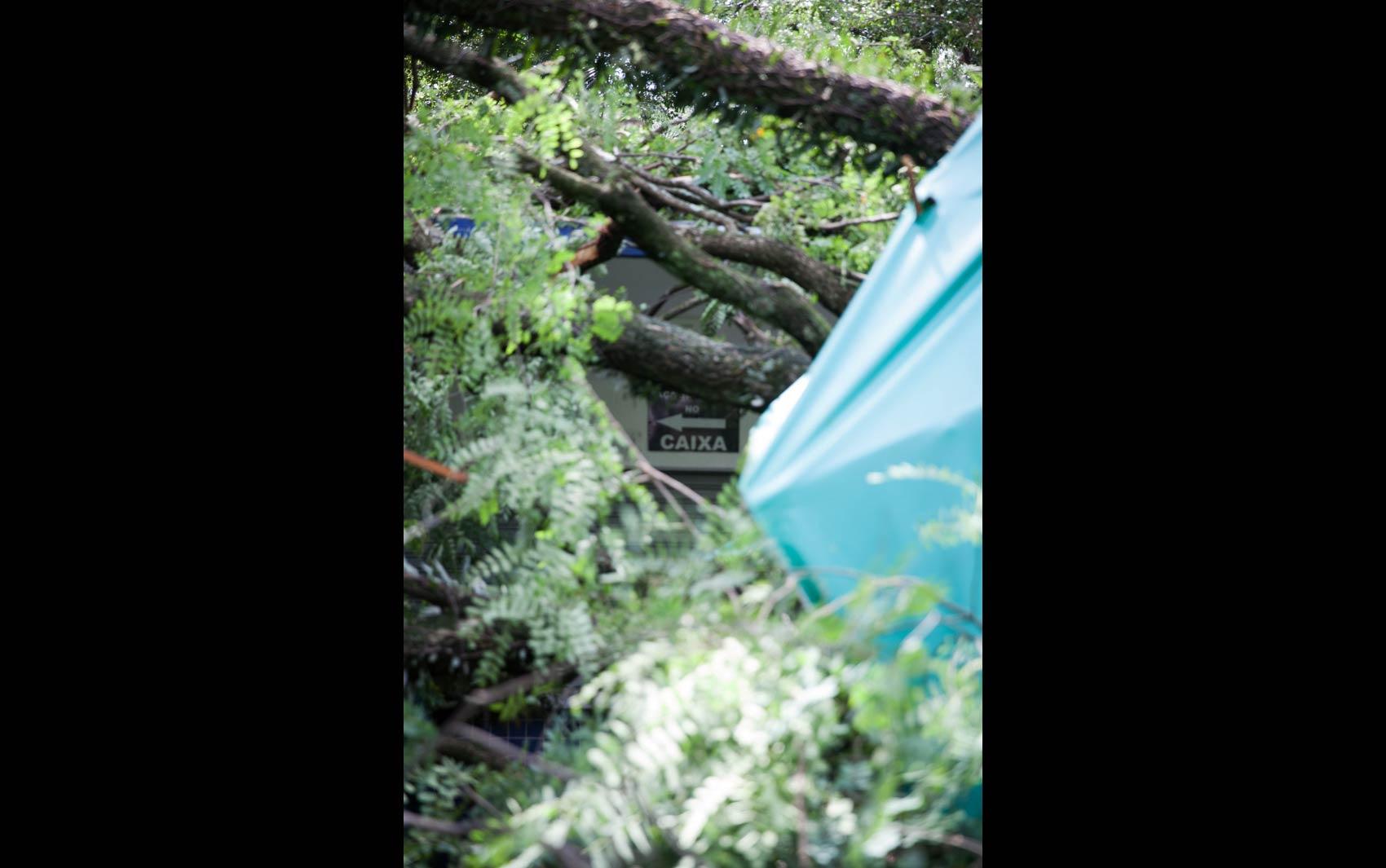 FOTOS: Forte chuva derruba árvores em São Paulo fotos em São  #2D909E 1700 1065