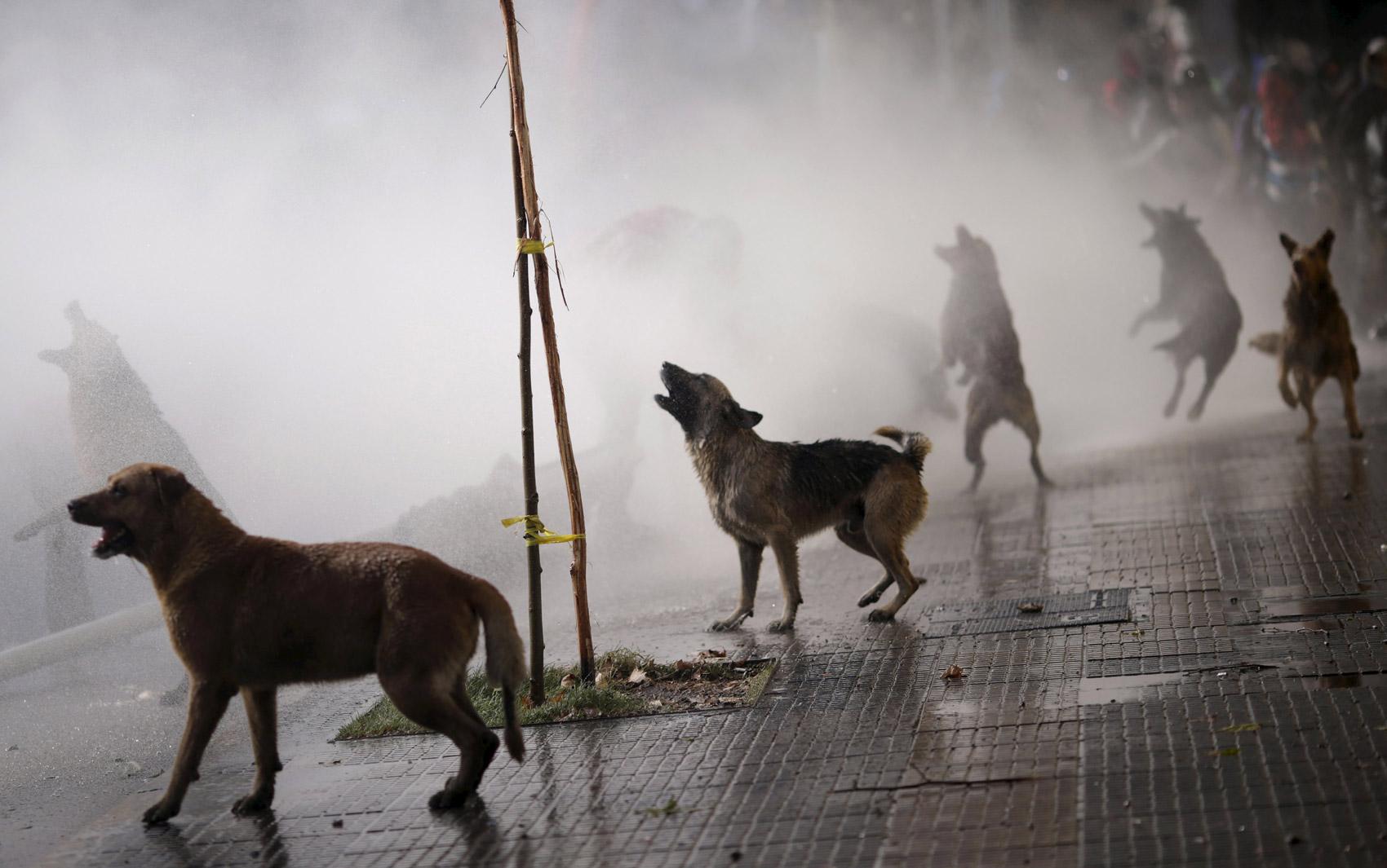 Cachorros latem contra a polícia, que usa canhão de água para dispersar protesto que pede mudanças no sistema educacional chileno, em Santiago