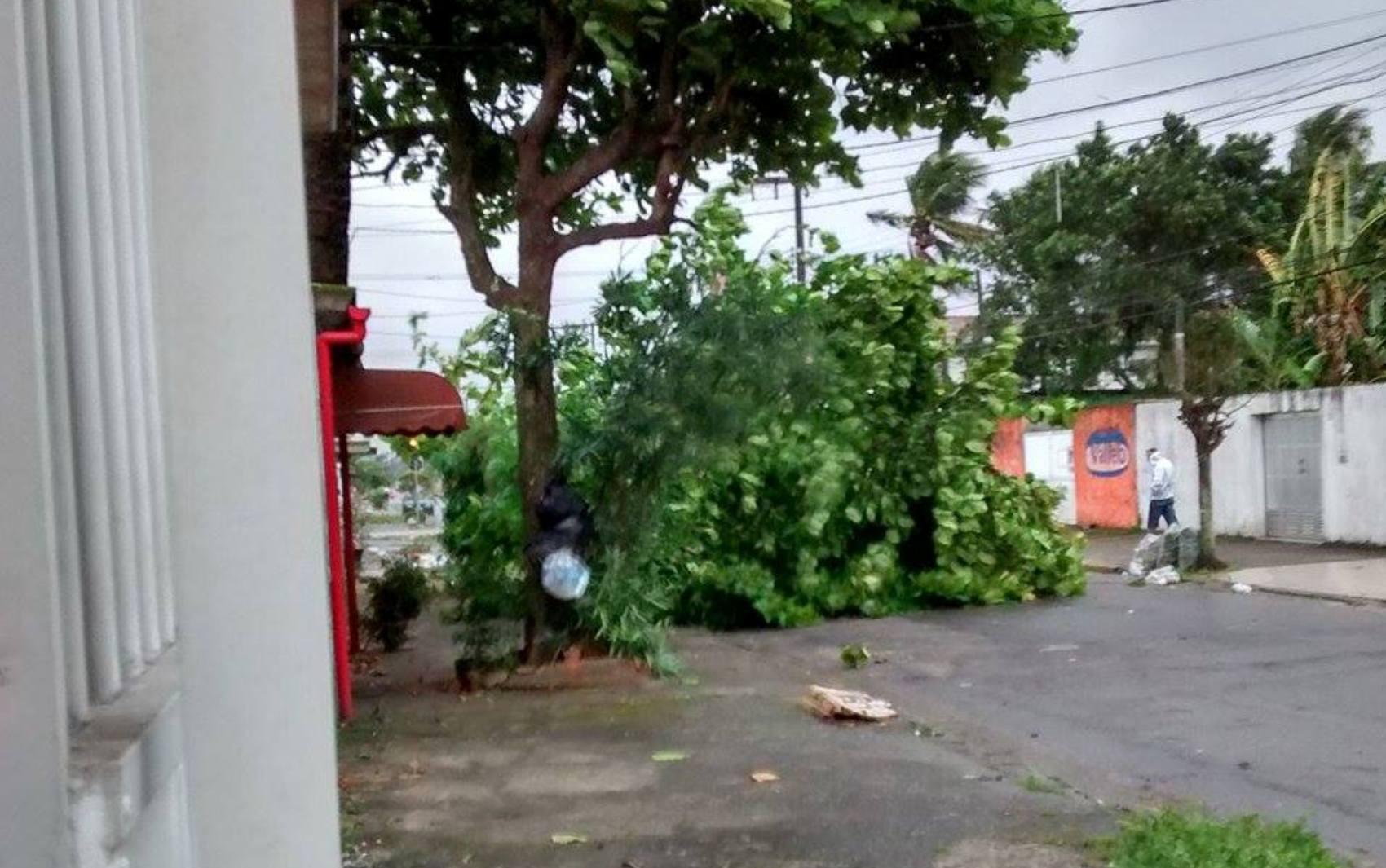 Árvore ficou caída no meio da Rua dos Gerânios, em Guarujá