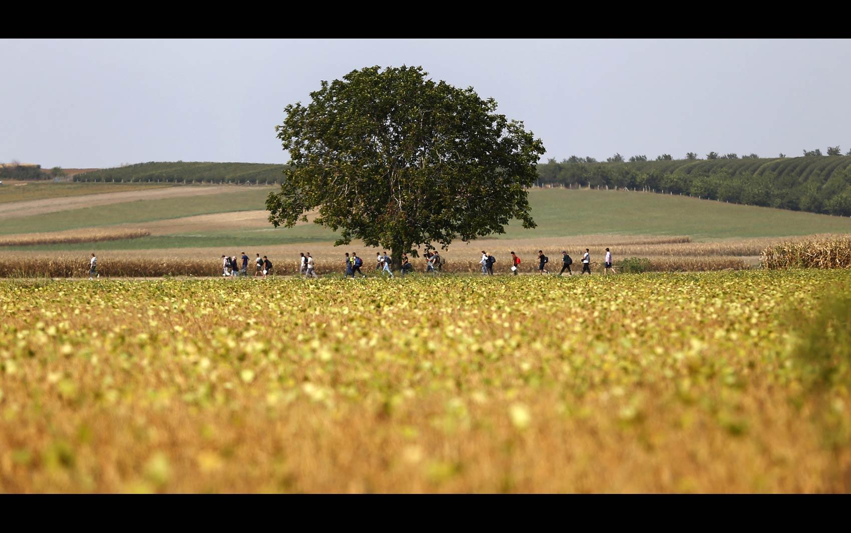 Pessoas percorrem estrada entre campos de plantação da região entre Sérvia e Croácia perto de Tovarnik, na Croácia. O país se tornou o novo destino de migrantes no lugar da Hungria, que tem dificultado a entrada em sua fronteira com a Sérvia