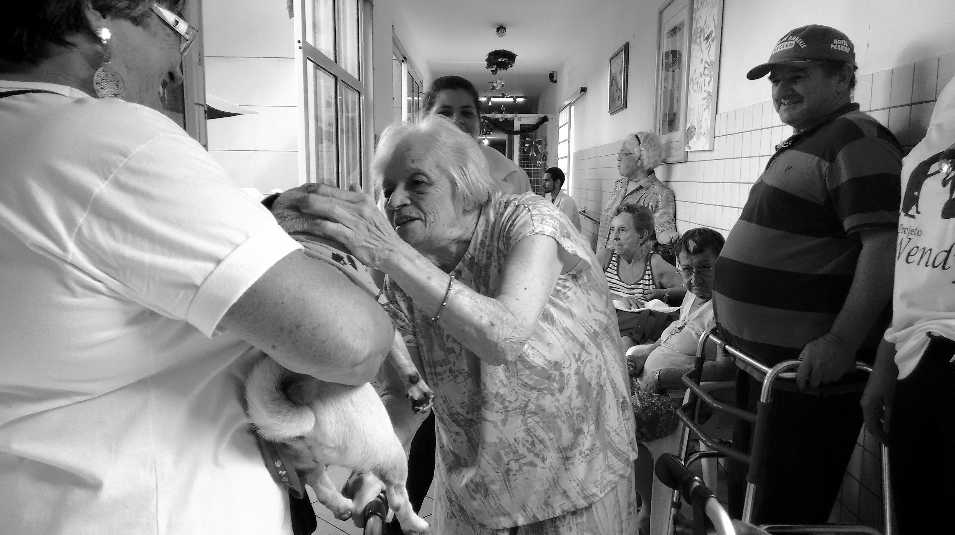 Voluntários levam animais ao Lar São Francisco de Assis