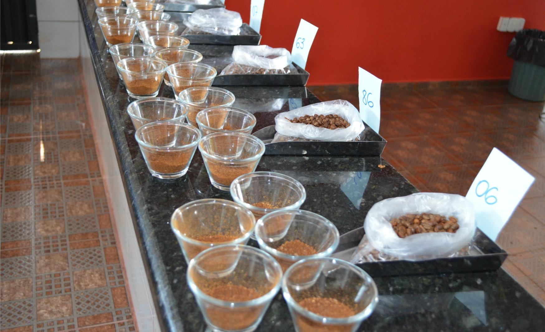 Produtores de Cacoal (RO) participam da etapa regional de concurso de café