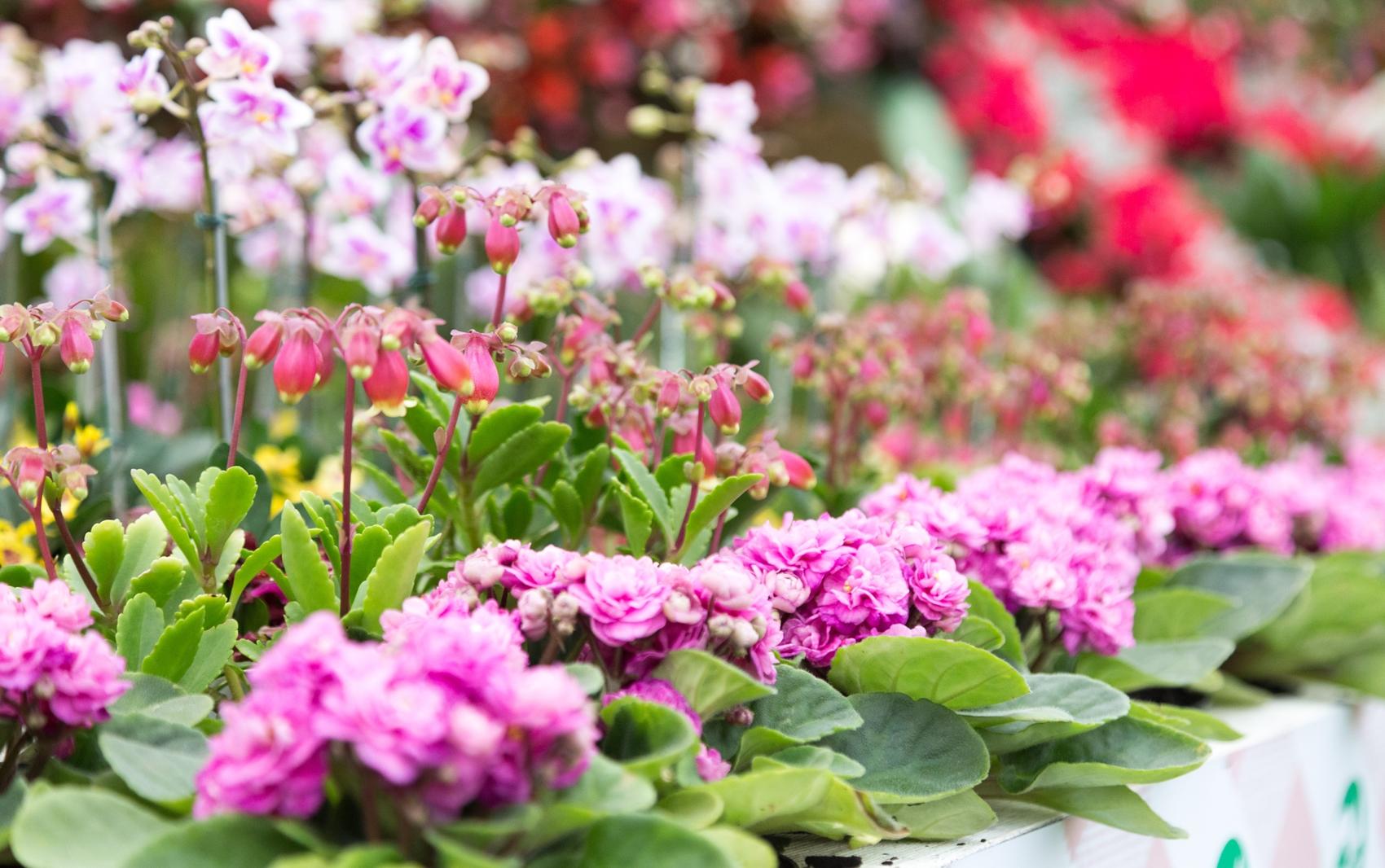 O pavilhão da Expo Aflord está enfeitado com mais de 200 tipos de flores e 15 mil vasos