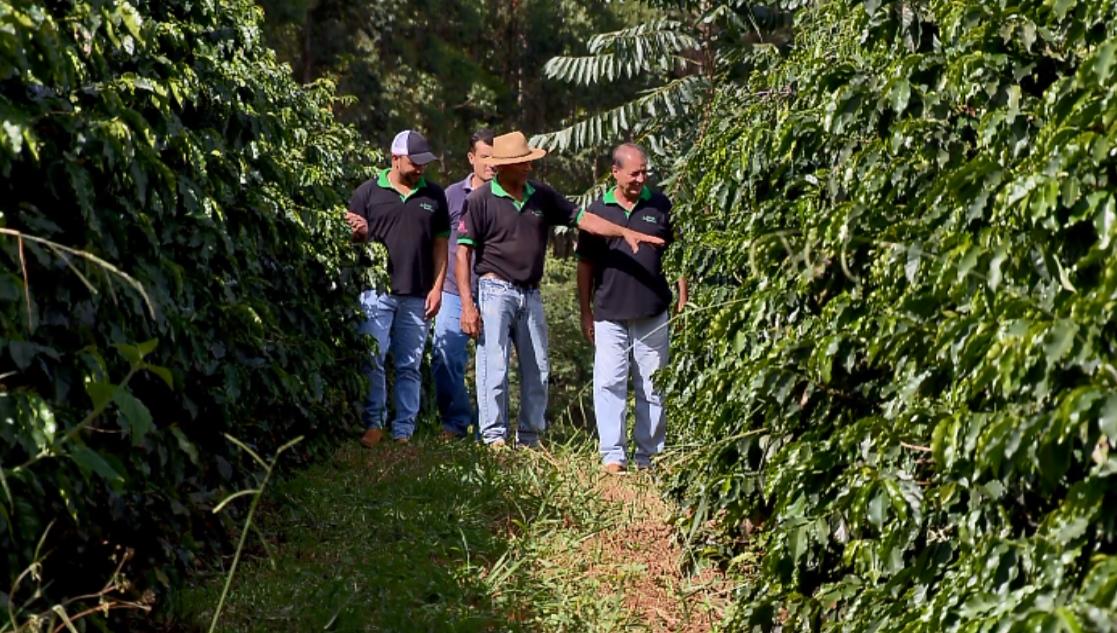 Manejo repleto de cuidados fez com que café produzido no Sul de Minas fosse tão valorizado (Foto: Reprodução EPTV)