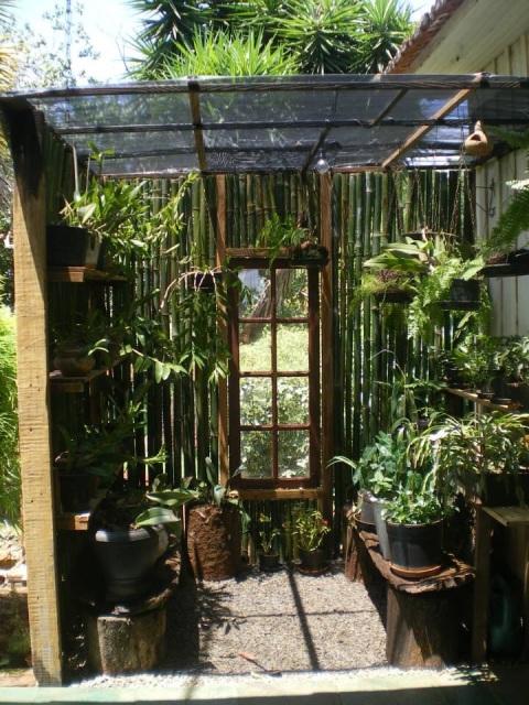 Um orquid rio pra chamar de seu blog hoje em casa da rede globo - Como se planta el bambu ...