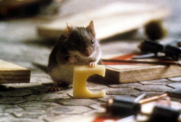 Ratinho (Foto: Divulgação)