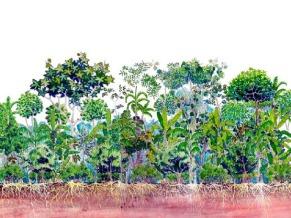 agroflorestas desenho 5 anos (Foto: Divulgação)