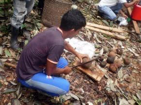Globo ecologia: as florestas e o clima (Foto: Divulgação)