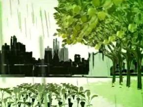 Reprodução da imagem disponibilizada no site da ONG SOS Floresta (Foto: Reprodução internet)