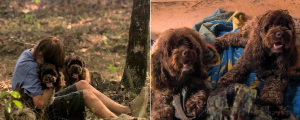 Dois Cachorrinhos Milagrosos (Foto: Divulgação)