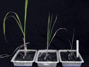 Globo ecologia: plantas aquáticas (Foto: Divulgação)