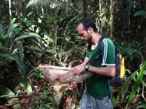 Globo Ecologia: peixes da Reserva Adolpho Ducke (Foto: Divulgação)