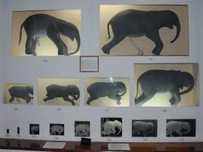 Museu de História Nacional Moçambique Feto de Elefantes (Foto: Divulgação)