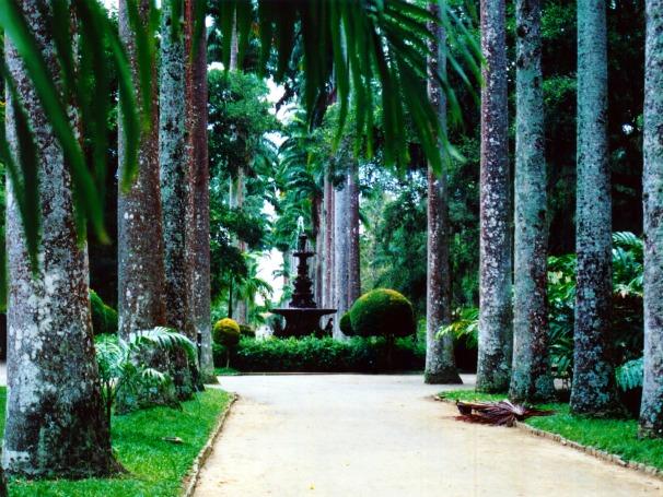 O Jardim Botânico do Rio cultiva palmeiras dos tempos do Inpério (Foto: Divulgação)