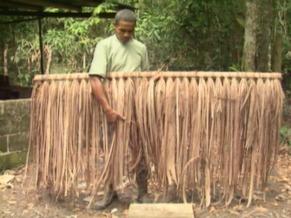 Piaçava penteada pelos índios Pataxó (Foto: Reprodução de TV)