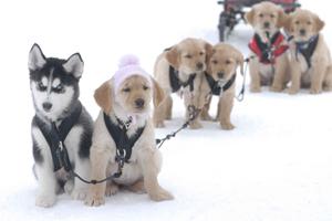 Snow Buddies - Uma Aventura no Gelo (Foto: Divulgação)