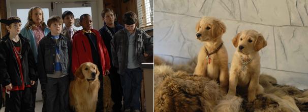 Enquanto os filhotes estão perdidos no Alaska, sua família fica desesperada com o sumiço (Foto: Divulgação)