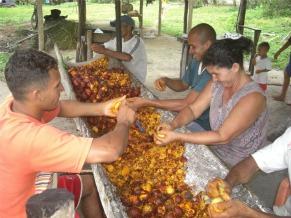 Agricultores que recebem assistência da Cáritas Regional II (Foto: Divulgação)