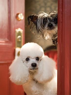 Foram usadas várias raças de cachorros para a criação da história (Foto: Divulgação)
