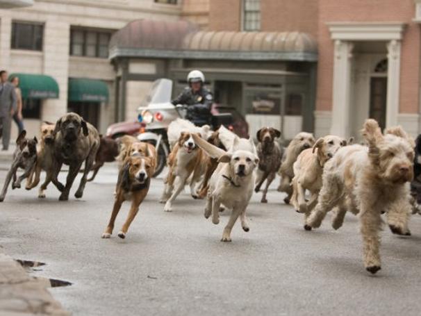 Mais de 70 cães foram necessários para produção do filme (Foto: Divulgação)