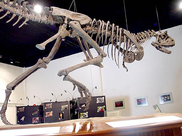 Tiranossauro Rex (Foto: Divulgação)
