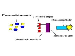 Biossensores (Foto: Divulgação)