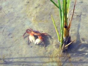 Lagoa dos Patos diversidade (Foto: divulgação)