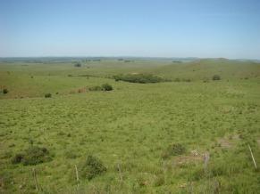 Uma imagem do Pampa, segundo menor bioma do Brasil (Foto: Divulgação / Eduardo Vélez)