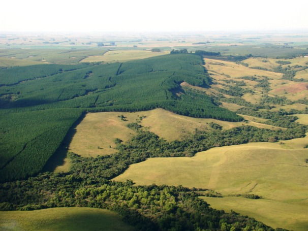 Pampa gaúcho (Foto: Divulgação)