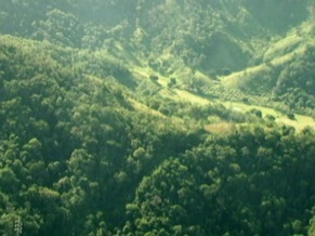 Floresta Vazia no Globo Ecologia (Foto: Reprodução de TV)