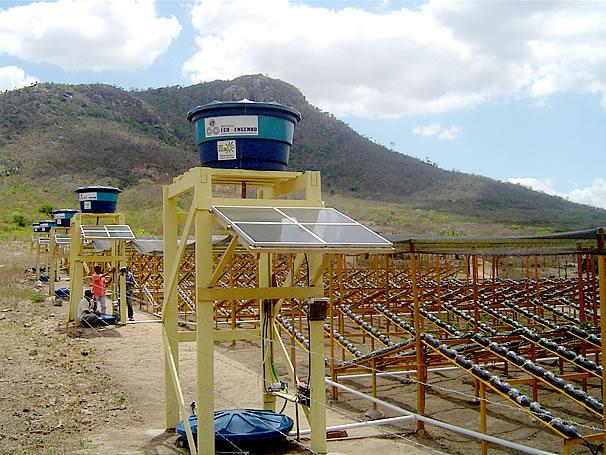 Sistema hidropônico (Foto: Divulgação)