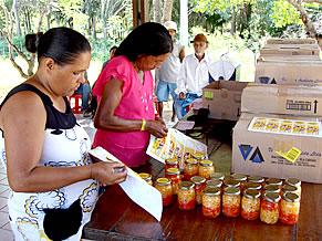 Cultivo de pimenta (Foto: Divulgação)