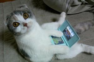 Gatinho e o Nintendo DS (Foto: Reprodução)