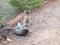 Gatinho e macaquinho brincando, viram sucesso na web (Foto: Reprodução/YouTube)