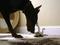 Duelo animal mostra gatinho desafiando doberman (Foto: Reprodução/YouTube)