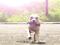 SUPER DOG - Tret patricando parkour pelas ruas (Foto: Reprodução/YouTube)