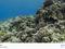 Agora Google Street View oferece até imagens subaquáticas (Foto: Reprodução) (Foto: Agora Google Street View oferece até imagens subaquáticas (Foto: Reprodução))