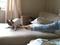 Cão fugindo de limão virou hit no YouTube (Foto: Reprodução) (Foto: Cão fugindo de limão virou hit no YouTube (Foto: Reprodução))