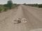 Foto de burro caido no Street View gerou polêmica na web (Foto: Reprodução/Daily Dot) (Foto: Foto de burro caido no Street View gerou polêmica na web (Foto: Reprodução/Daily Dot))