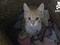 Gato 'goleiro' brinca na hora de lavar a roupa suja em casa (Foto: Reprodução/Youtube) (Foto: Gato 'goleiro' brinca na hora de lavar a roupa suja em casa (Foto: Reprodução/Youtube))