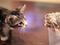 Harley, o ouriço, e Loki, o gato, aparecem se conhecendo em vídeo no Youtube (Foto: Reprodução/Youtube) (Foto: Harley, o ouriço, e Loki, o gato, aparecem se conhecendo em vídeo no Youtube (Foto: Reprodução/Youtube))