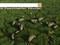 Bing, o buscador da Microsoft (Foto: Reprodução)