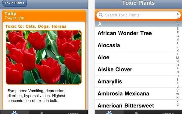 Descubra quais plantas são tóxicas para os cães com o Petoxins (Foto> Reprodução/ Mashable) (Foto: Descubra quais plantas são tóxicas para os cães com o Petoxins (Foto> Reprodução/ Mashable))
