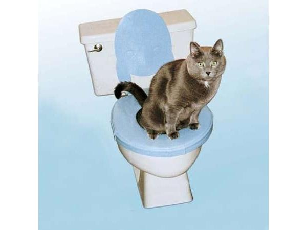 Banheiro para gatos (Foto: Reprodução)