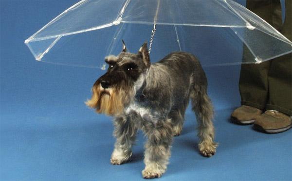 Um guarda-chuva para o melhor amigo do homem (Foto: Reprodução)