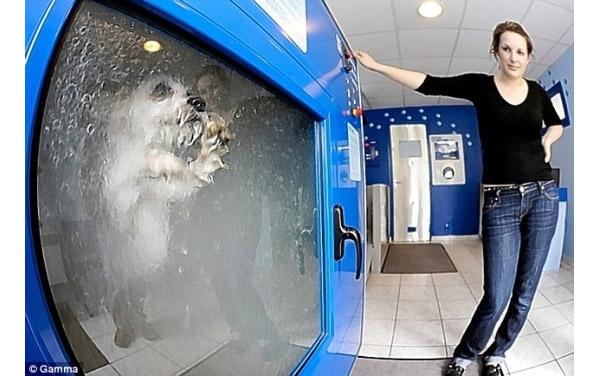 Máquina de lavar cachorros (Foto: Reprodução)