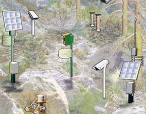 Floresta Inteligente (Foto: Divulgação)
